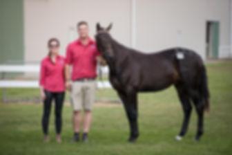 Harness Racing, Standardbred, Horses, Stallions, Horse Racing, Yearling Preparation, Standardbred, Horse Training, Trent Yesberg