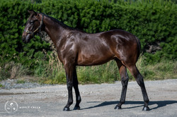 353: Mister Whitten - Bay Colt - Bet