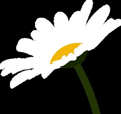 daisy花