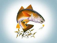 redfish-picture.jpg