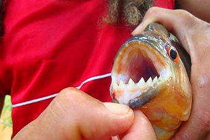 piranhas.jpg