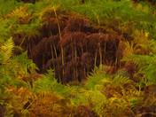 Woods-5-Edit-2.jpg