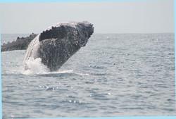 Baleine (2)
