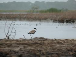 oiseaux-canoe-kayak-lac-togo
