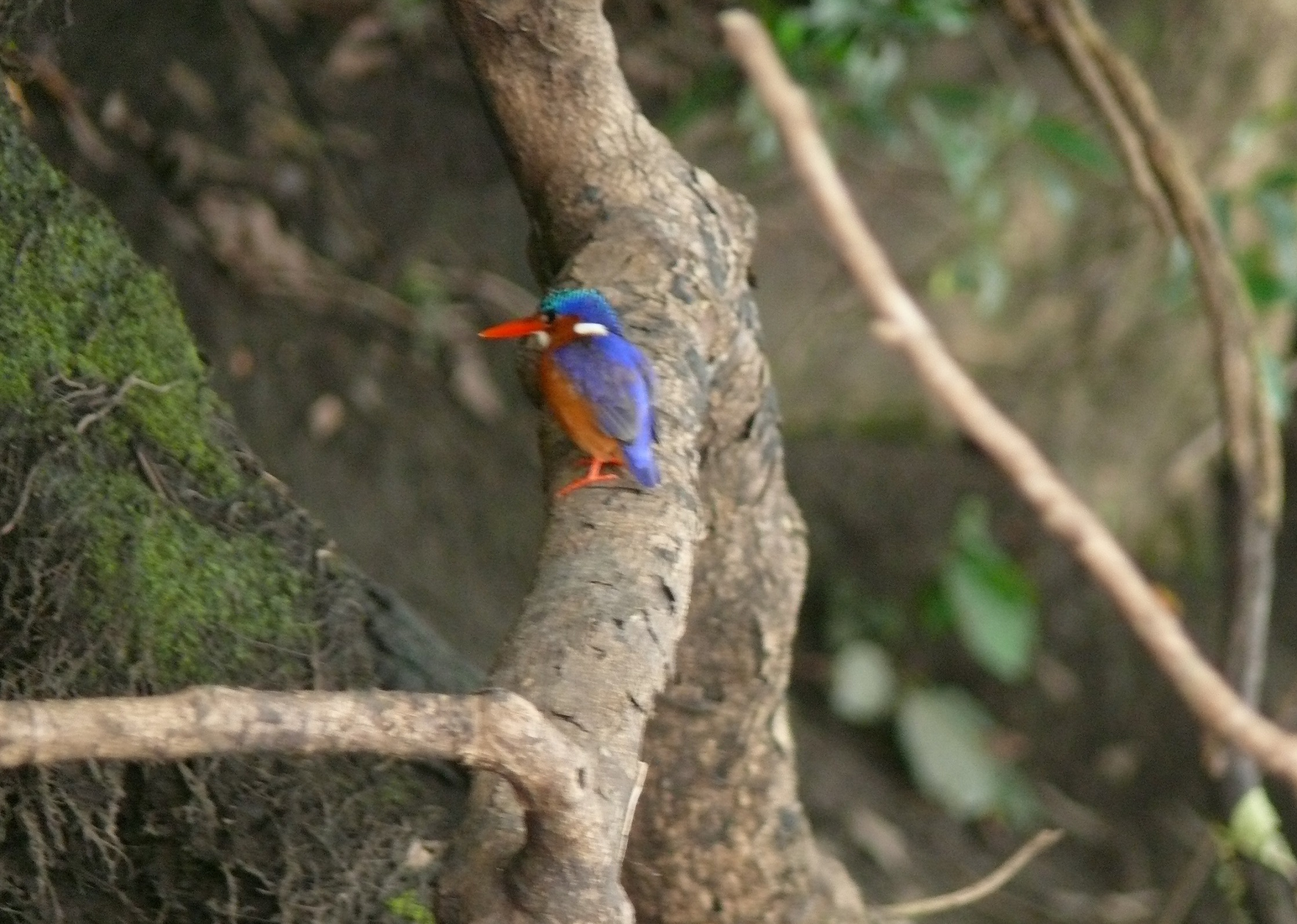 oiseaux-fleuve-Mono
