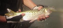 peche-poissons-fleuve-Mono-togo