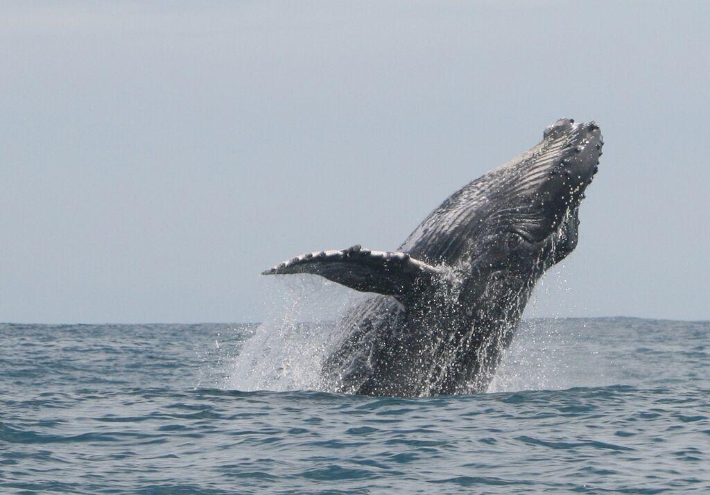 Baleine (3)