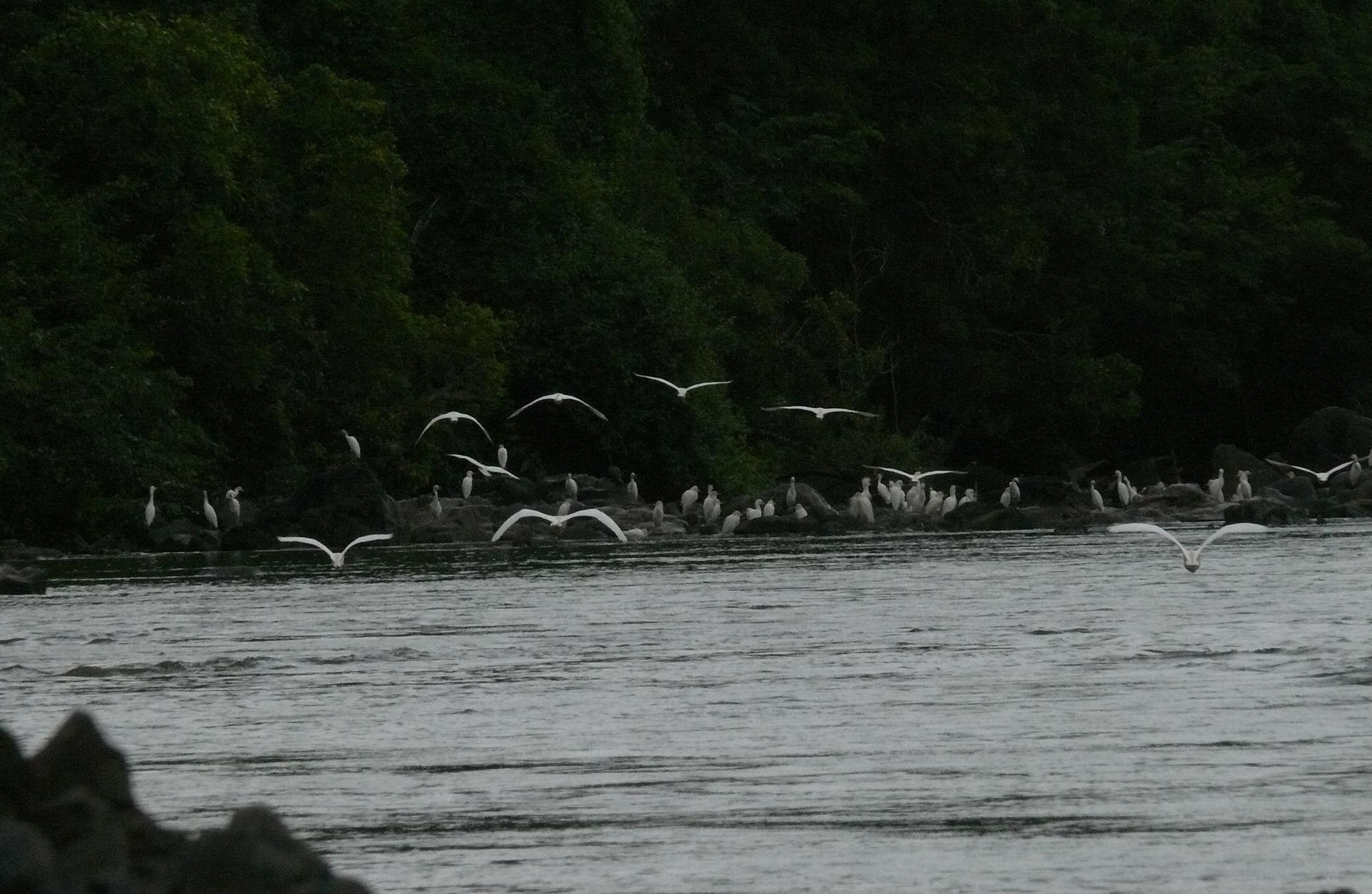 oiseaux-fleuve-mono-togo