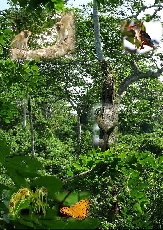 Découverte_de_la_forêt_tropicale.jpg