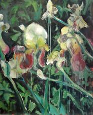 Iris dim : 81x100 cm