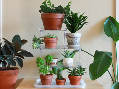 3 Clever Tips for Indoor Plant Organization