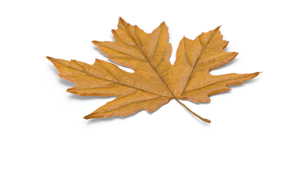 Maple Leaf.F16.2k-800.png