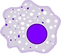 kisspng-macrophage-white-blood-cell-monocyte-phagocyte-cell-5ad959b0c985b6_edited.png
