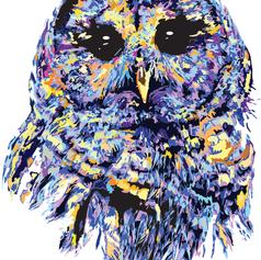 Petstract Owl