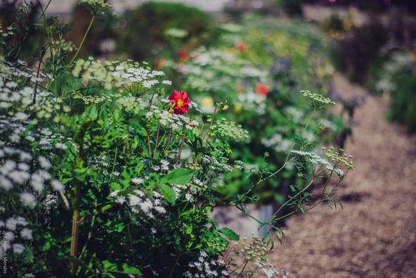 Bæredygtige blomster dyrket med omsorg for naturen