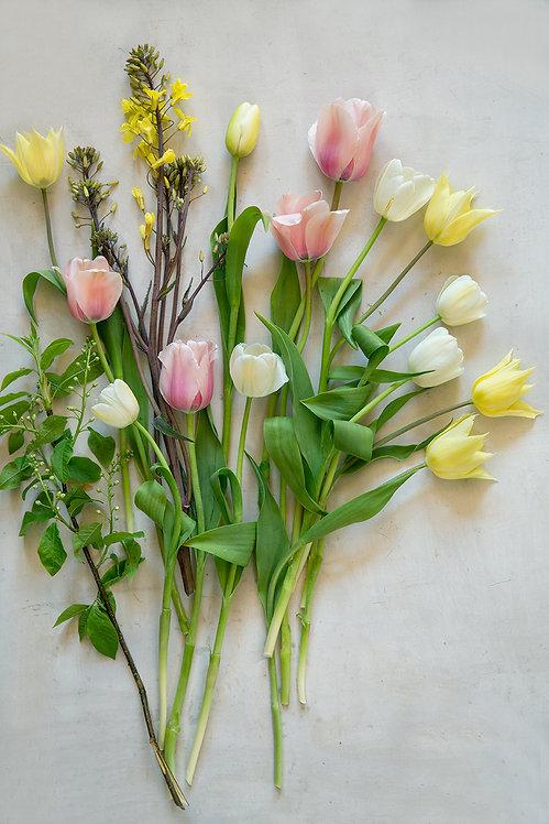 Store Bededag - Tulipanfestival 30/4