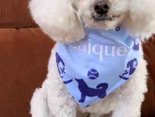 Iguatemi Esplanada promove neste fim de semana atividades para os pets e seus donos