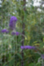 July 2010 closeup lilac 3.JPG
