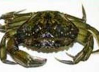 Farine de Crabe Vert