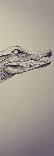 Crocodile, baby. (2020)