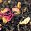 Thumbnail: ISTANBUL | Schwarzer Tee, Zimt, Apfel & Rosenblüten