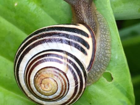 Evolutionist Defense: Too Slow to Observe