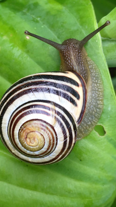 With Snail Mucus