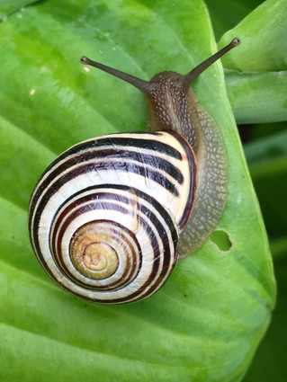 Homeschool Garden Club - Slugs and Snails
