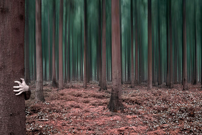 forêt étrange mystère photo art tekprod
