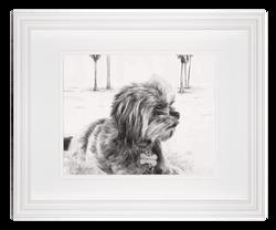 dog1_frame_matte_edited