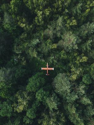 Самолет в лесу