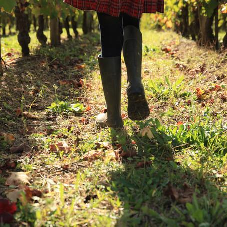 Le bonheur est dans les vignes !