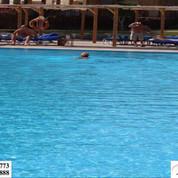 saad-swimming-pools-سعد-حمامات-سباحه+(6)-1920w.jpg
