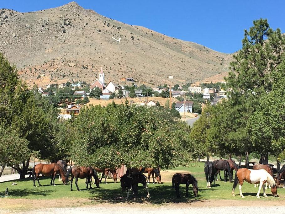 Horse-Town-View-1024x768.jpg