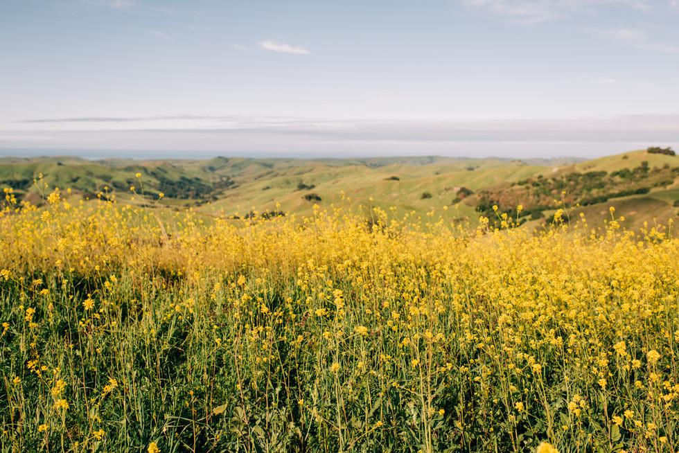 0002-dylan-john-western-califonia-weddin