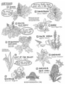 BT_PlantScavengerHunt_pg2.jpg