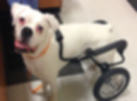 Dog Wheelchair for Large Dogs