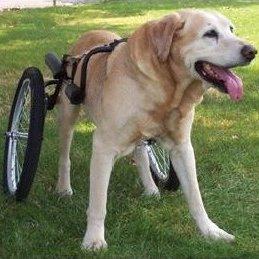 dogcart_edited