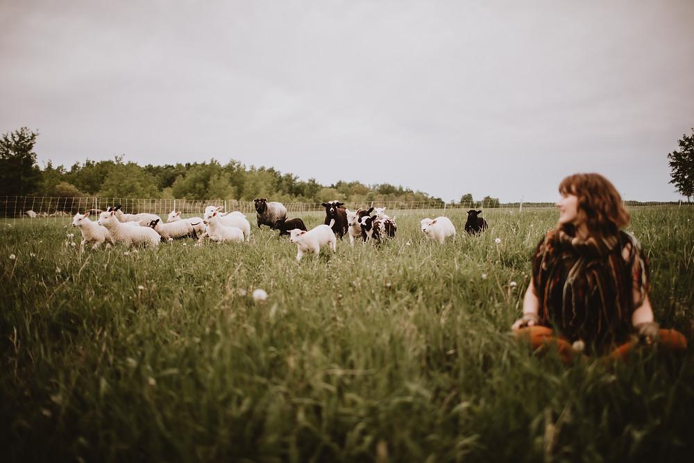 Sheep running through field.