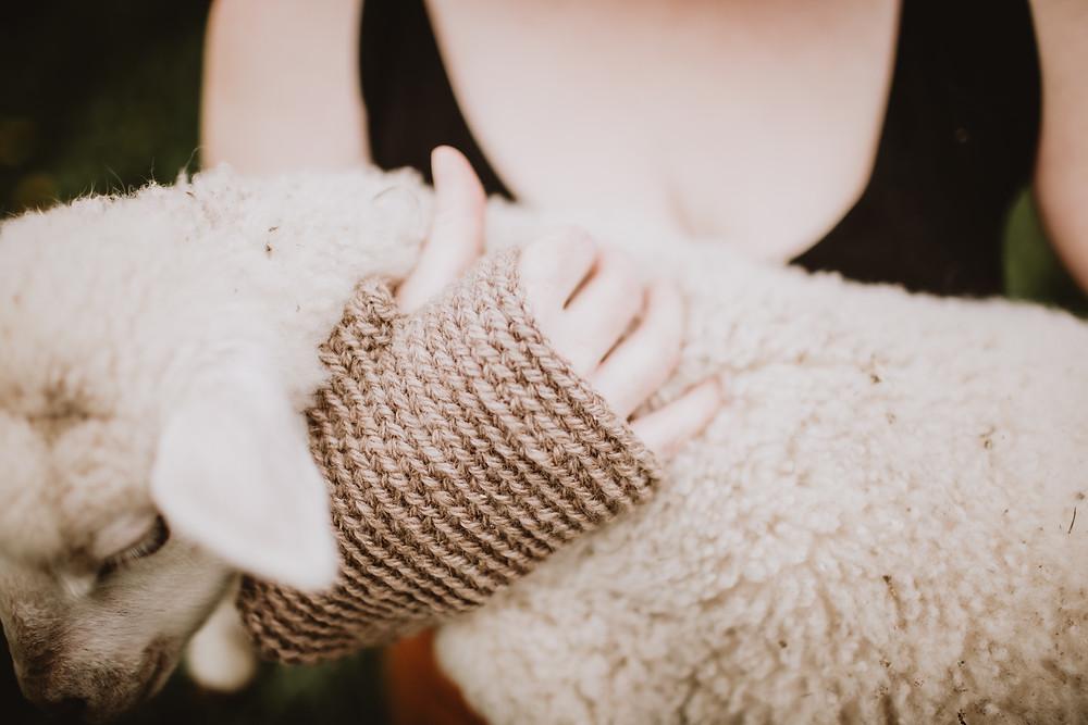 Fingerless wool gloves, knit from Manitoba fibre, held against lamb.