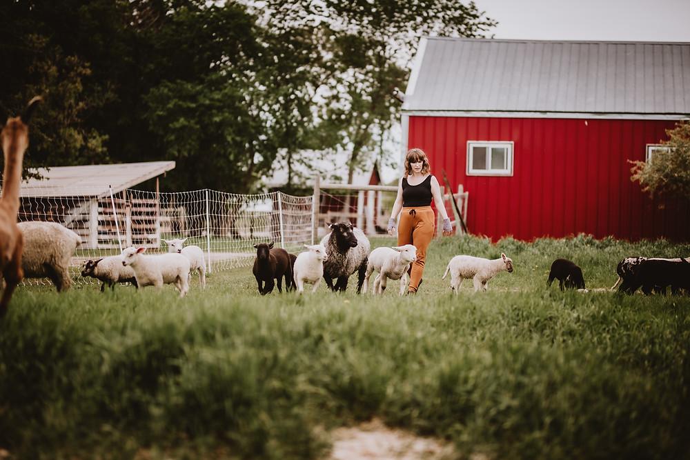 Woman herds sheep during brand shoot.