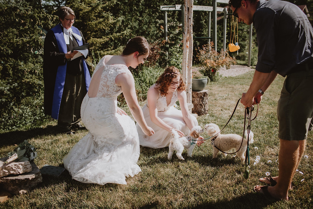 Puppies bring brides their rings.