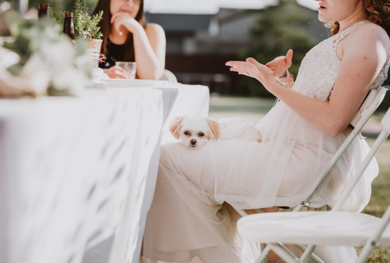 Summer Micro Wedding Featuring Pup