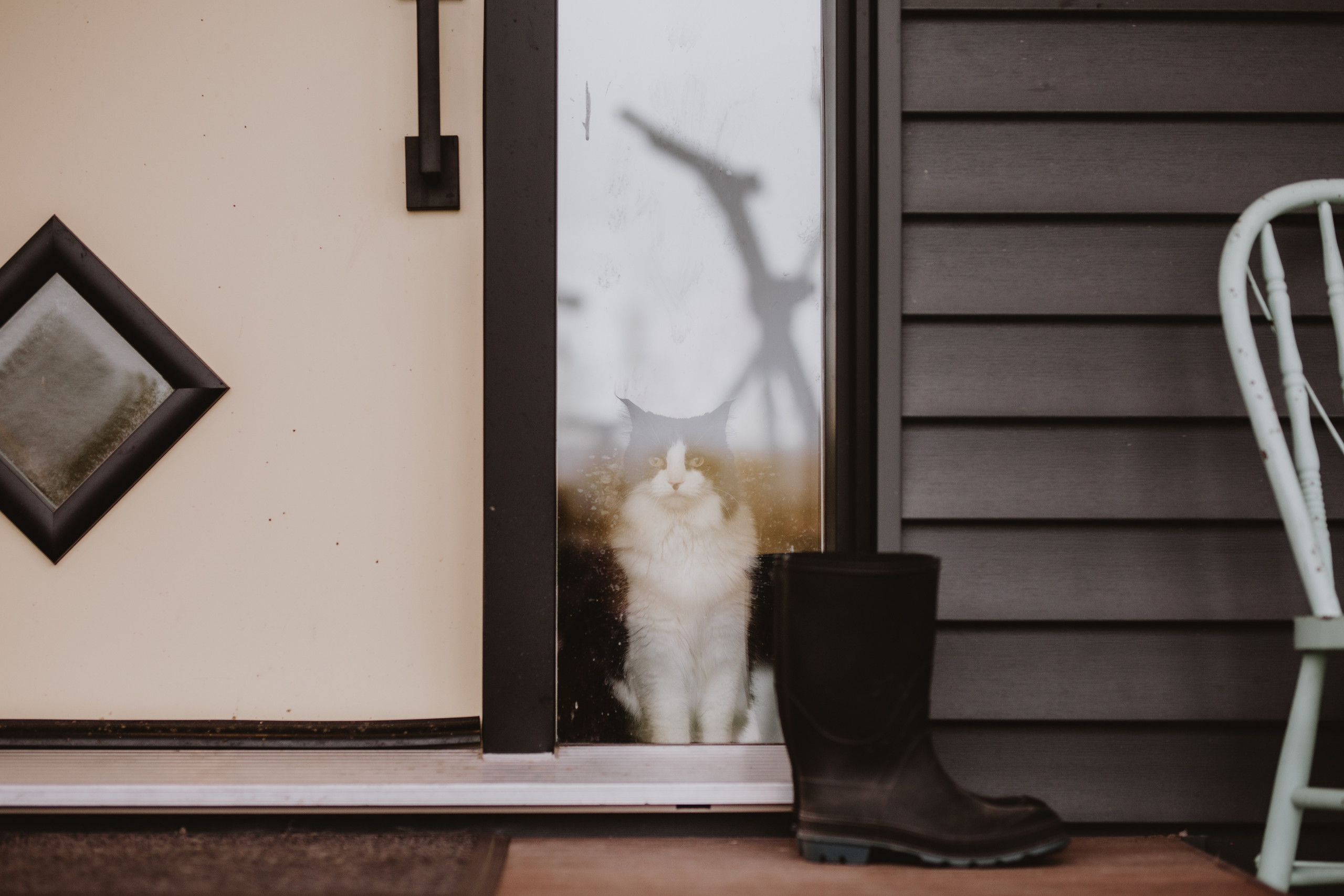Cat poses in front entrance
