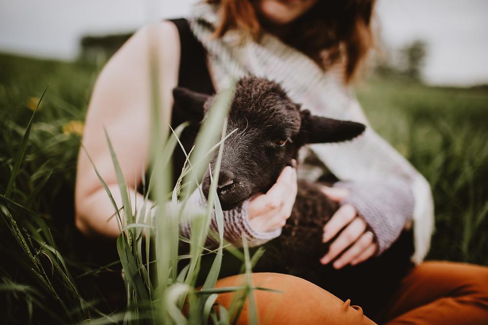Black lamb sits on the lap of a local fibre artist.
