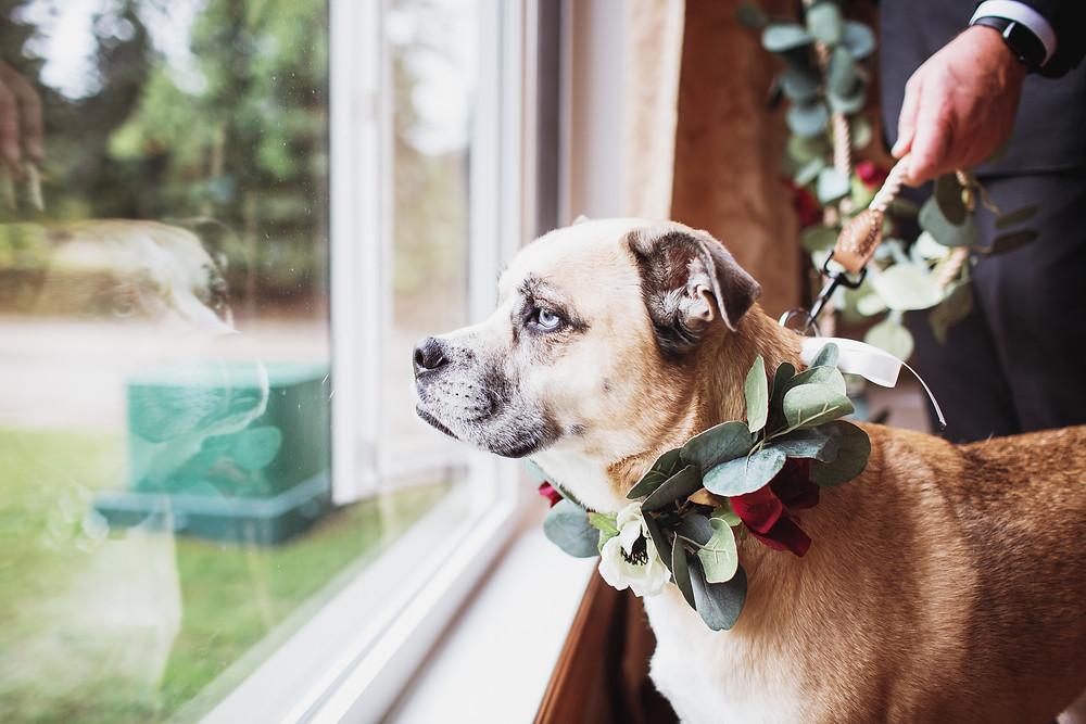Flower dog in Manitoba fall wedding.