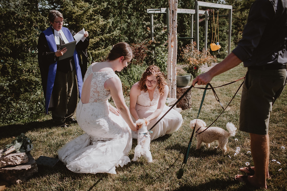 Brides retrieve rings from their puppy ring-bearers.