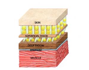 Facia layers.png