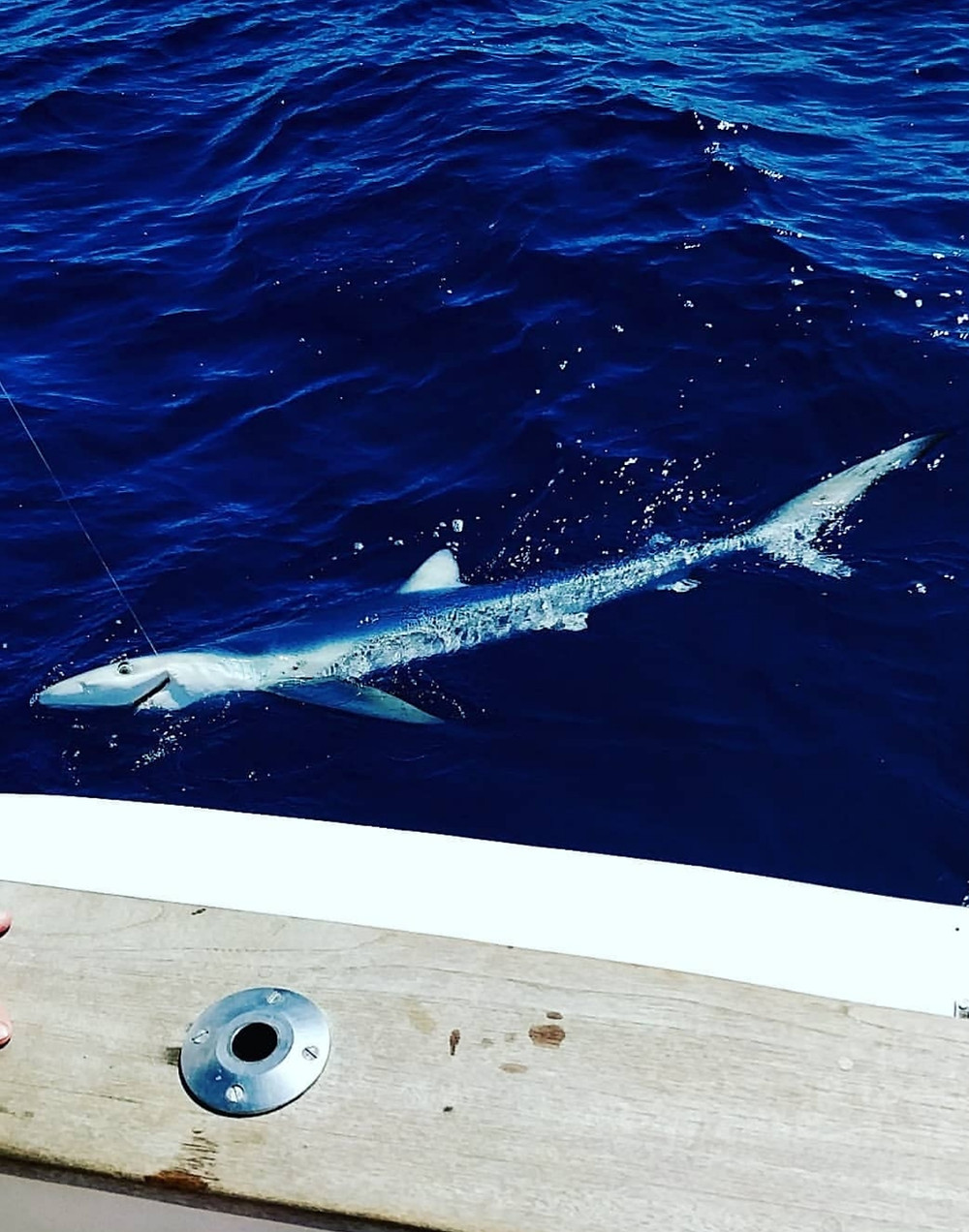 FISHING SHARKS IN MALLORCA
