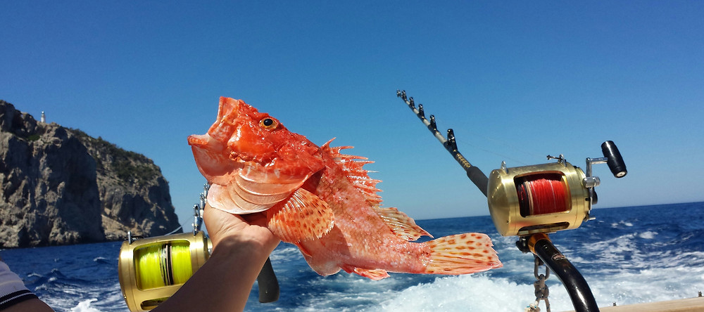 BOTTOM FISHING & TROLLING FISHING MALLORCA